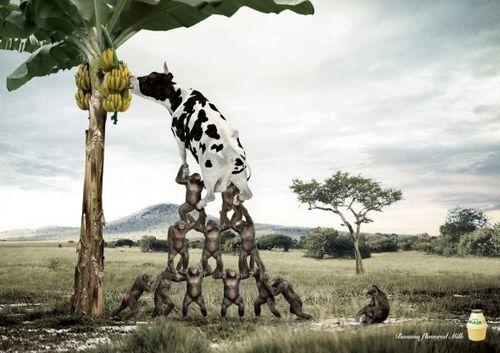 Banana_grassland.preview