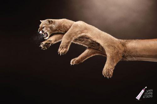 Dermotriad-wolf-bear-coguar-print-370102-preview-adeevee
