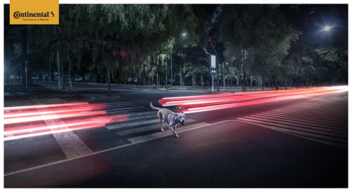 Continental_luces-dog_crossing